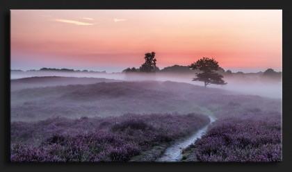 Gasterse Duinen pad en bomen - Purple Heather Netherlands