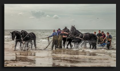 Paardenreddingsteam Ameland
