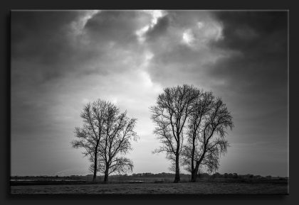 DUO Trees Bomen - 2 times 2 double trees in black and white